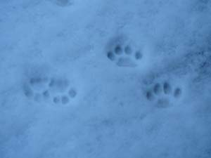 snowpaws.jpg