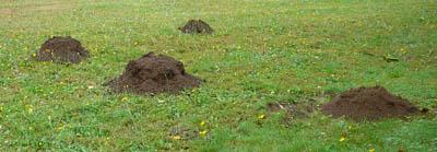 molehills650.jpg