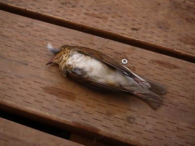birdbody670.jpg