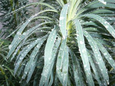 raineuph728.jpg