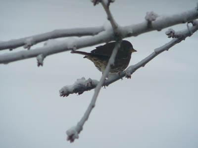 snwybirdbranch7691.jpg