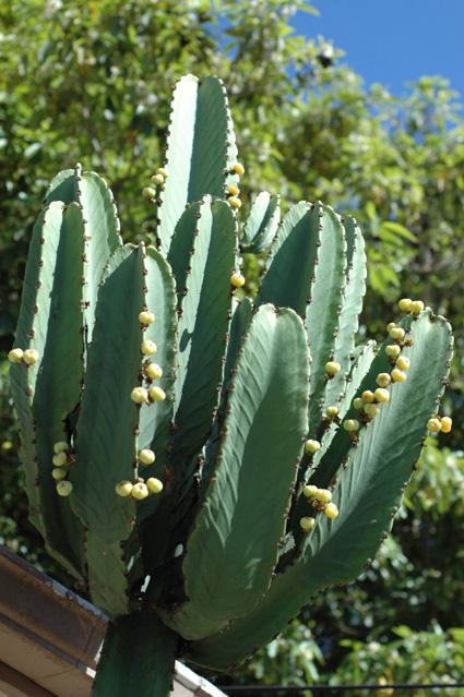 cacactus.jpg