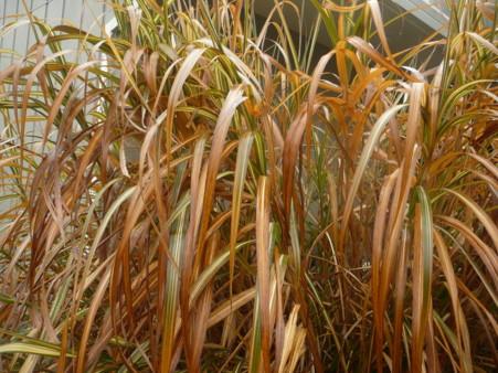 bbdorgrass.jpg
