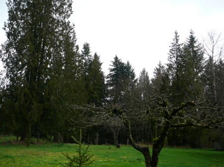 bigtrees.jpg