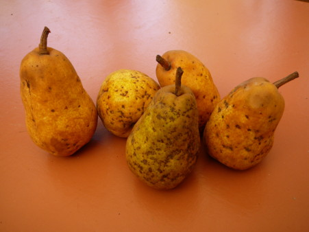 ugly pears