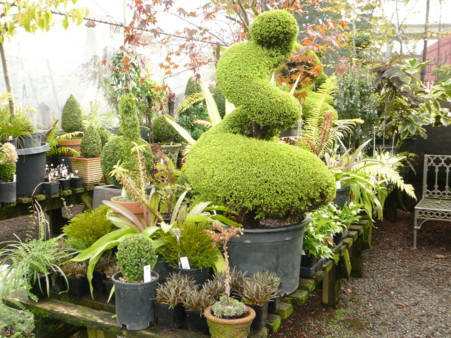 topiary +