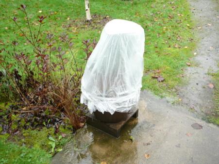 'Elizabeth' wrapped