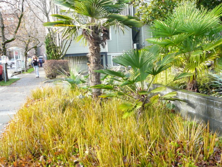 grasses with palms
