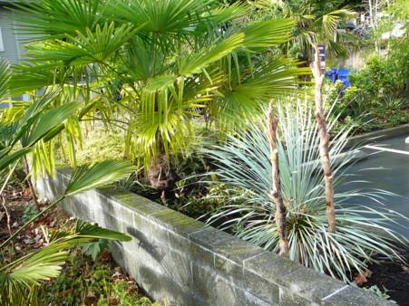 more plantings
