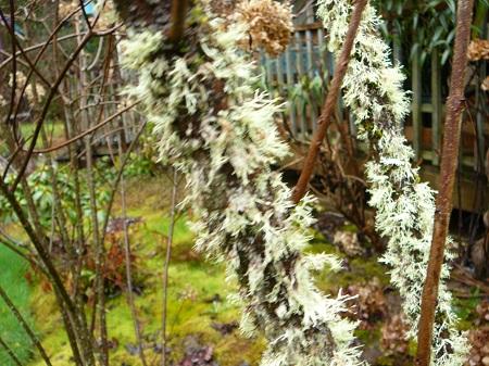 lichen or moss?