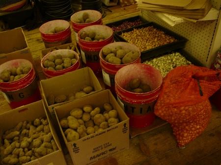 seed potatoes and onion sets