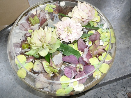 mixed hellebore blossoms