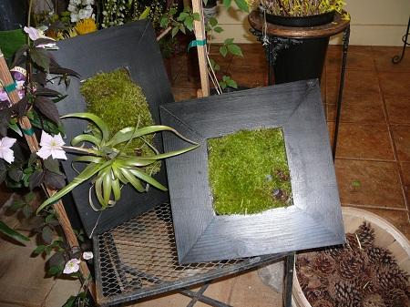 framed moss