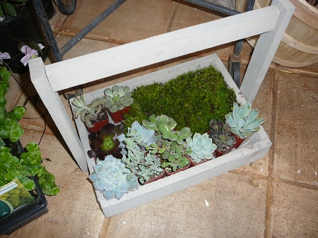 succulents in a trug