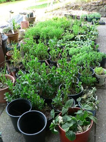 more sale plants