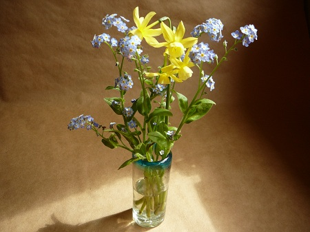 narcissus hawera & forget-me-nots