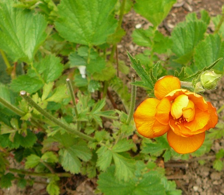 geum (coming back)
