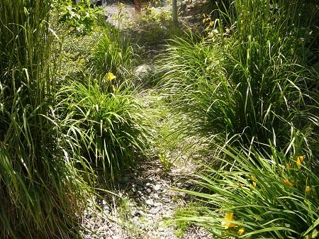 bioswale landscaping