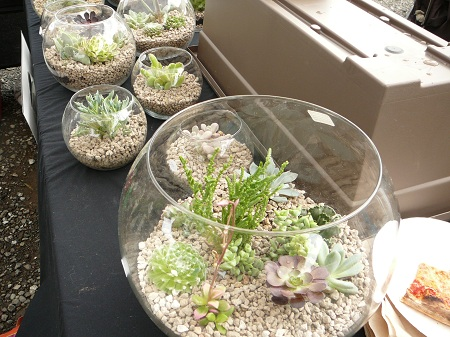 terreriums in bowls