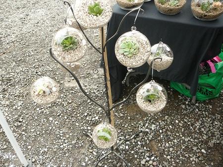hanging globe terrariums