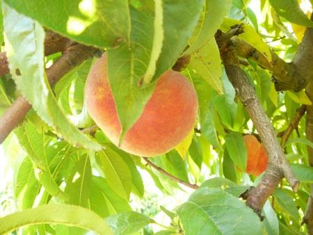 mmmm…peaches