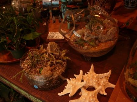 terrariums and shells