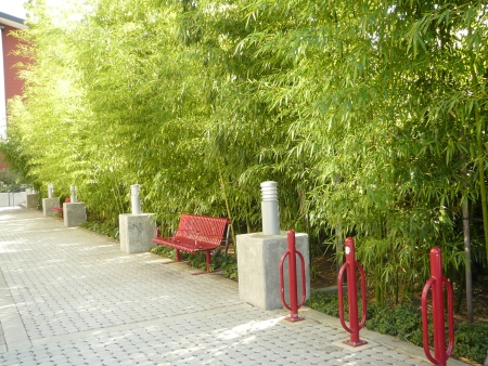 bamboo-lined alley