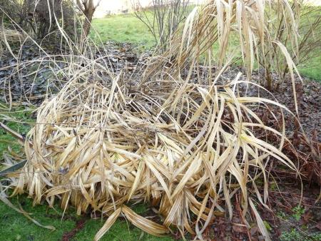 rain-beaten grasses