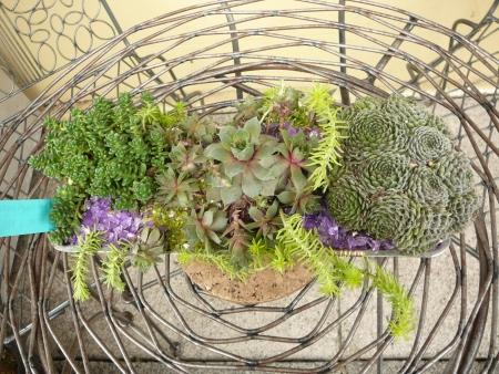 tabletop pot of succulents