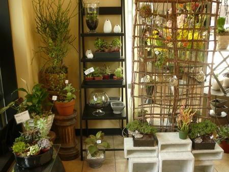 succulents and tilandsias