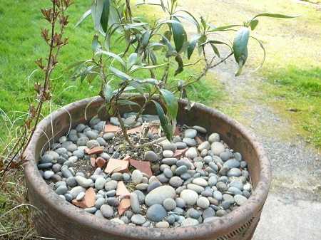 rocks as mulch