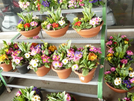 pots of spring flowers