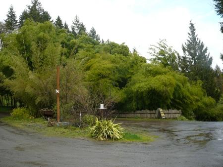 driveway of Bamboo Garden
