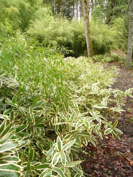 mixed bamboo border