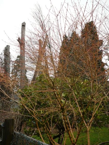 neighbor's leafless tree