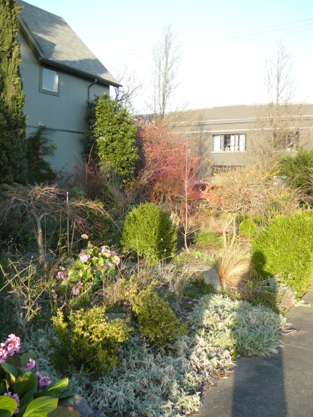 overview of garden