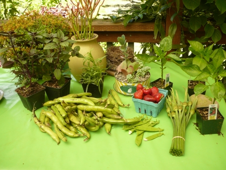 garden and market