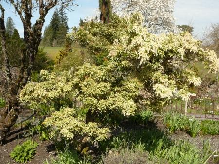 Joy Creek pruning