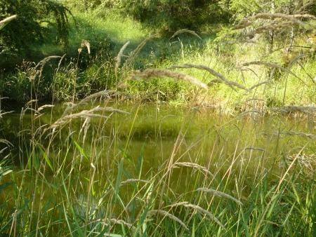 Allen pond