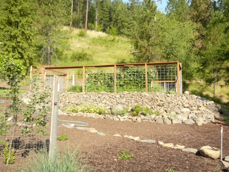 veggie garden with deer fence