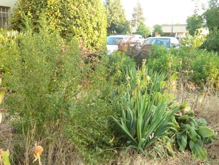 xeric plants