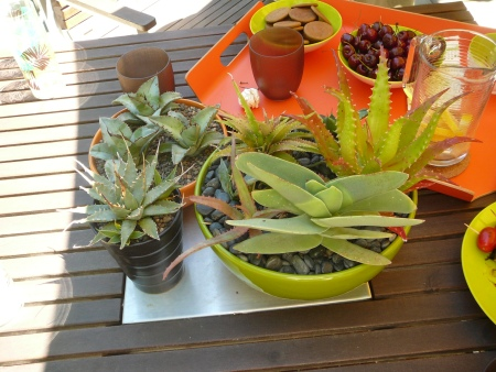 table top goodies & plants