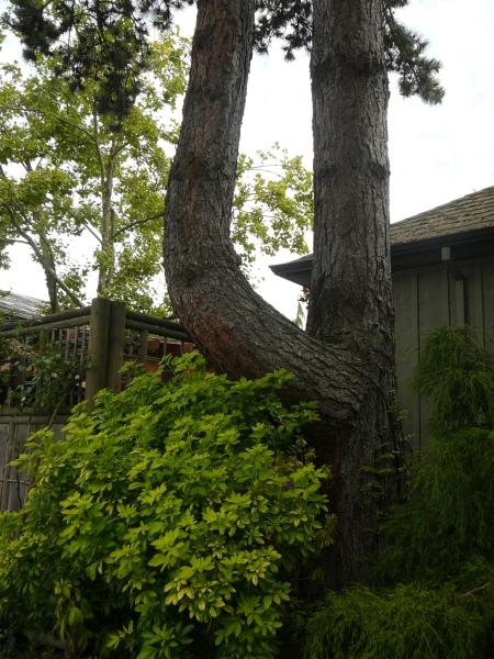 tree sheltering deck