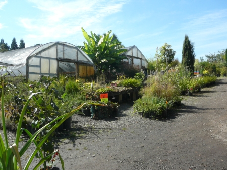 Jockey Hill Nursery