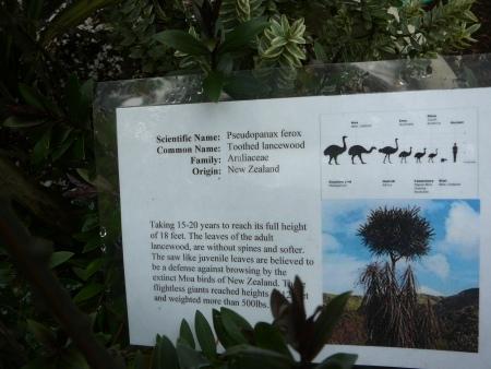 Pseudopanax ferox signage