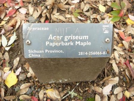 Acer sign