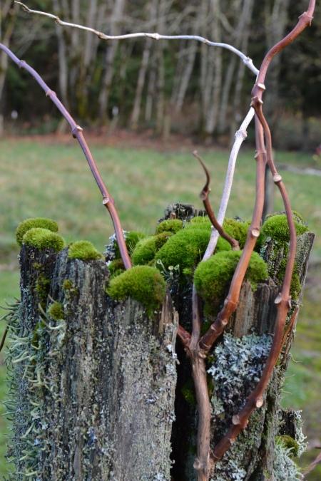 moss on fencepost