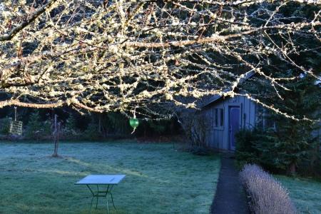 sun on cherry branches