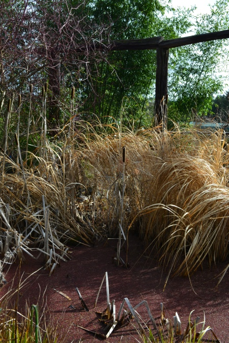 grasses and cat tails