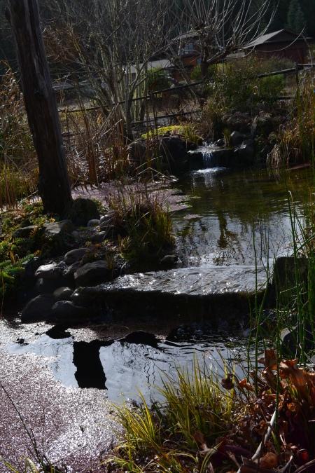 rill feeding the pond